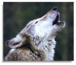 Der Hund stammt nicht vom Wolf ab.