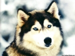 Hunde können nur 10 Jahre alt werden!