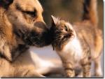 Der Deutsche Schäferhund gehört zu den beliebtesten Hunderassen der Welt. Er ist intelligent, wachsam und treu.:-)