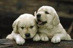 Alle Hunde verstehen sich mit Kleintieren und kleine Kinder stehen als höchstes in der Rangordnung.
