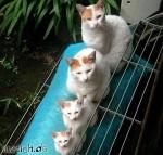 Wie sollte eine Katze sein?