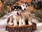 """Du hast dir einen neuen Hund ausgesucht. Was sollte dein """"Traumhund"""" jetzt machen? Welche der folgenden Möglichkeiten findest du am besten?"""