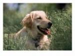 Gehst du mit deinem Hund Gassi?