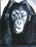 Du gehst mal wieder in den Zoo: Was schaust du dir an?