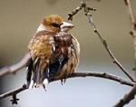 9 Vögel sitzen auf einem Ast. Ein Jäger schießt 3 davon ab.Wie viele bleiben sitzen?