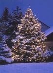 Habt ihr einen Weihnachtsbaum?