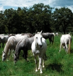 Was darf dein Pferd auf jeden Fall nicht fressen?