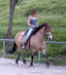 Dein Pferd hat wohl schlecht geschlafen es ist total träge und hat schlechte Laune. War etwas mit dem Futter nicht in Ordnung? Was tust du?