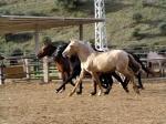 Dein Pferd ist nun ein Jahr alt, du denkst: