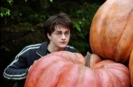 Harry, Ron oder Draco?