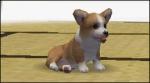 Nintendogs - Welcher Hund passt zu dir? Test für die Labrador-Version