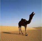 Wie heißt die Hauptstadt von Mauretanien?