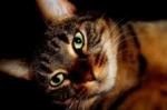Das Gehör der Katzen ist besser entwickelt als das der Menschen. Um das wie vielfache hört eine Katze besser?