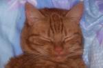 Wie nennt man die tretelnden Bewegungen, welche eine Katze macht wenn sie sich wohl fühlt?