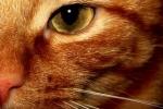 Wie lautet der ägyptische Name der Katze?