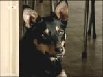 Der Hund der zu sehen ist heißt Turbo und gehört Jodi.