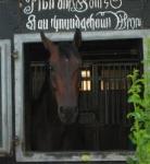 """Welches Pferd wurde 2005 zum """"Pferd des Jahres"""" gewählt und ist sehr erfolgreich unter Meredith?"""