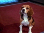 Wie heißt der Hund von Johnathan Archer?