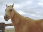 Was ist die Lieblingspferderasse von Dave?