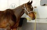 Und jetzt die letzte Frage: Wie heißen die Pferde von Stevie, Regan, Jodi und Kate?