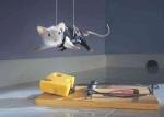Tut deine Ratte solche Dinge, wie die Maus auf dem Foto?