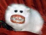 Macht deine Ratte Fotos von sich selber, auf denen sie wirklich bösartig aussieht?