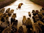 Lebt deine Ratte mit anderen Tieren zusammen?