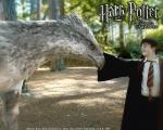 Wie hieß Hagrids Hippogreif? (3. Film)