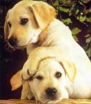 Erst mal was leichtes: Welche Hunderasse gibt es nicht?