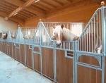 In einem mit Ruhe & Ordnung geführtem Stall fühlen sich einige Pferde nicht wohl.