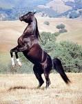 Wie viel Temperament sollte Ihr Pferd haben?