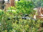 Um ein perfektes Dschungelgefühl aufkommen zu lassen arbeitete ein ganzes Künstlerdorf im Kamerun die zahlreichen Skulpturen etc. aus und spezielle