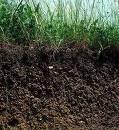 Welche Tiere sind besonders wichtig für die Fruchtbarkeit unserer Böden?