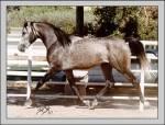 Was für ein Pferd wärst du?