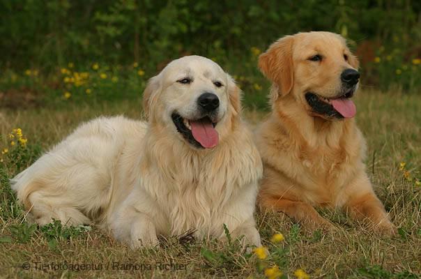 welcher hund ist ideal f r dich mit welchem hund w rdest. Black Bedroom Furniture Sets. Home Design Ideas