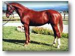 Welche Pferderasse ist hier auf dem Bild zu sehen?
