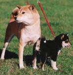 Was für eine Größe wäre für dich der absolute Traum-Hunde-Freund?
