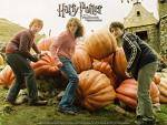 Harry Potter: Zauber und Flüche