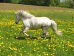 In wie viele Teile wird das Pferd gegliedert und wie heißen sie?