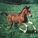 Wie nennt man Pferdebabys?