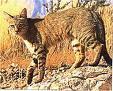 Von welchem Tier stammen alle unsere Katzenrassen ab?