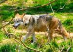 Bist du ein erfahrender Wolf?