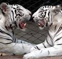 Tier-Orakel - Wie bist du in der Liebe? (Ladys only!)