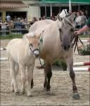 Wie nennt man ein ganz junges Pferd?