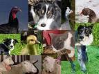 Welches Tier wärst du gerne?