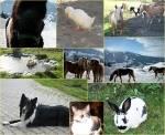 Welches ein Tier wärst du gern?