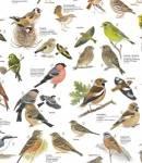 Welcher dieser Vögel wärst du am liebsten, wenn du einen Tag lang einer davon sein könntest?