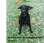 Machst du/Würdest du viel mit deinem Hund (machen)?
