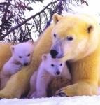 Wo findet man Grizzlys und Eisbären, Aleute und Eskimos, 3 Klima- und Vegetationszonen und viel Einsamkeit?