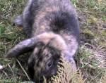 Wieviel Futter benötigt ein Kaninchen?